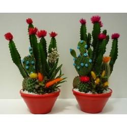 les cactus et les plantes grasses riviera piante. Black Bedroom Furniture Sets. Home Design Ideas