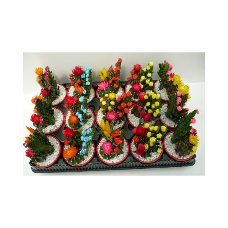 ... Cactus e Piante grasse > Piante grasse > Composizioni piante grasse