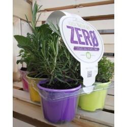 Aromatiche mix residuo zero  vaso colorato